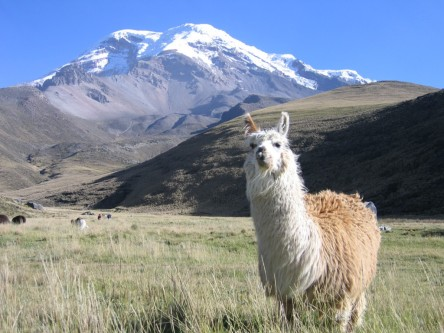 a really nice picture of a llama